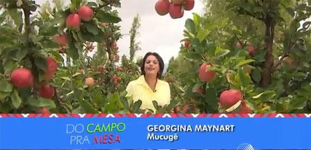 Produção de maçã gera renda e emprego em Mucugê na região da Chapada Diamantina