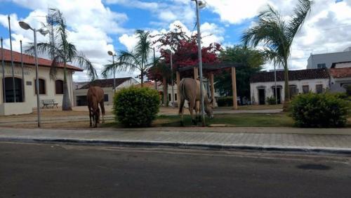 Moradores de Rio do Antônio reclamam de animais soltos em frente à Praça da Prefeitura